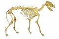 犬の骨肉腫について …の画像