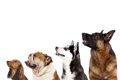 犬の去勢時期はいつ…の画像