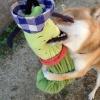子犬の噛み癖に困っ…の画像