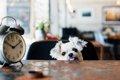 犬は時間が分かる?…の画像