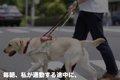 盲導犬のプロ意識に…の画像