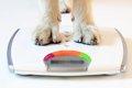 柴犬の適正体重につ…の画像