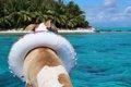 愛犬と旅行に行こう…の画像