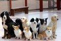 犬の軟便は大病のシ…の画像
