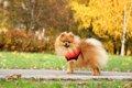 犬の飼育にかかる毎…の画像
