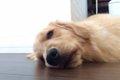 犬が栄養失調!毎日…の画像