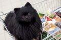 愛犬をペットショッ…の画像
