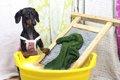 犬用品の洗濯の方法…の画像