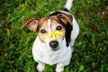 犬が『花粉症』にな…の画像