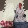 犬の洋服選びのポイ…の画像