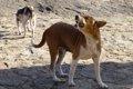 犬が地震前に見せる…の画像