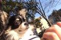 犬と楽しめるレジャ…の画像