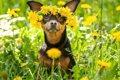 春でも犬は『熱中症…の画像