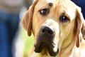 愛犬を叱るとショボ…の画像