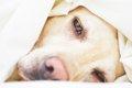 犬の腸内環境改善に…の画像