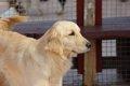 犬の殺処分場から助…の画像