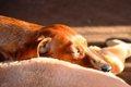 高齢犬の体調管理・…の画像