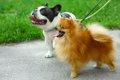 長毛種の犬と短毛種…の画像