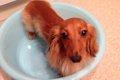 犬のお風呂の入れ方…の画像