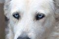 犬の目の病気につい…の画像