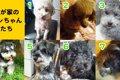 7頭のワンちゃんと…の画像