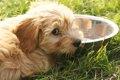 愛犬の水飲みをサポ…の画像