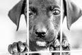 愛犬のことが嫌いに…の画像
