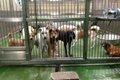 「保護犬」を迎える…の画像
