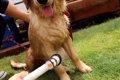 犬のシャンプーの正…の画像