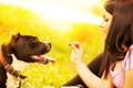 犬にとってオヤツは…の画像
