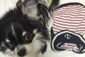 激安 犬服通販リス…の画像
