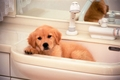 犬のシャンプー! …の画像