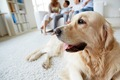 キャリアチェンジ犬…の画像