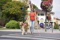 街で盲導犬を見かけ…の画像