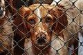 犬の引き取り屋とは…の画像