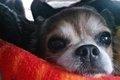 どんな保護犬もピカ…の画像