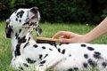 犬の毛ヅヤ(毛並み…の画像