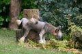 オス犬のマーキング…の画像