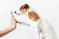 「犬をひとりで飼う…の画像