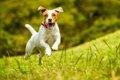 犬が『楽しいね!』…の画像