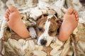 犬が飼い主の足元で…の画像