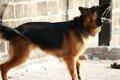 犬の声帯手術とは …の画像