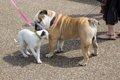 初対面同士の犬を挨…の画像