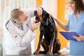 犬の歯石を取るスケ…の画像