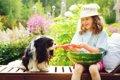 老犬の夏バテ予防6選の画像
