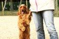 タレント犬コーダの…の画像