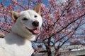 犬が関わる俳句9選の画像