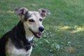 犬がノミやダニに刺…の画像