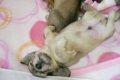 愛犬の赤ちゃんが欲…の画像