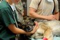 愛犬の保定は動物病…の画像